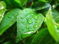 Algi spirulina i odżywianie
