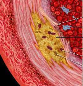 Tłuszcze i cholesterol