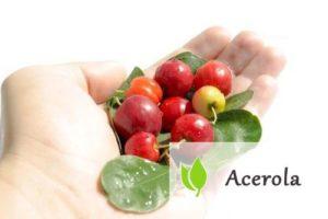 Acerola – czy to najbogatsze źródło witaminy C