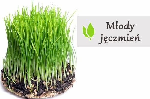 ziola zielony jeczmien
