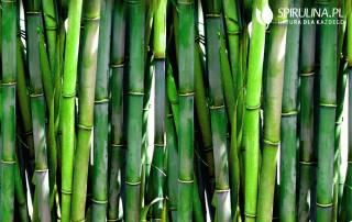 Bambus zamiast skrzypu? To się opłaca!