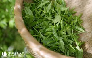 Najczęściej pomijana superżywność – zielona herbata