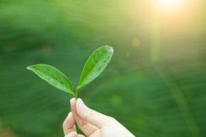 Najczesciej pomijana superzywnosc – zielona herbata