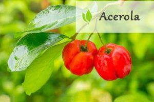 Acerola i witamina C - zastosowanie, fakty, mity