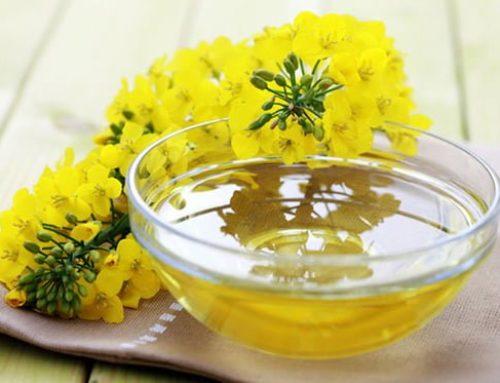 Olej rzepakowy – zdrowie w płynnej postaci