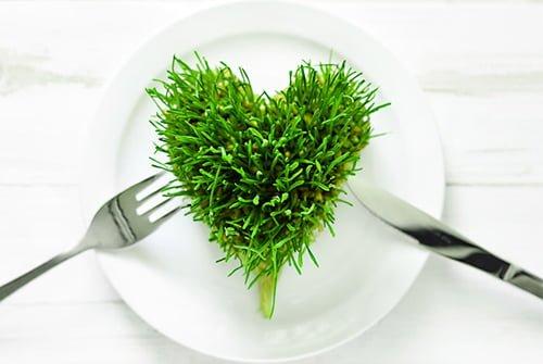 Powody, dla ktorych warto przyjmowac alge Chlorella
