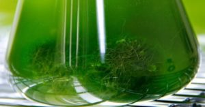 Spirulina i Chlorella - skuteczny detoks organizmu