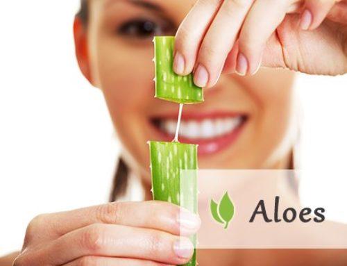 Aloes i korzyści z jego przyjmowania