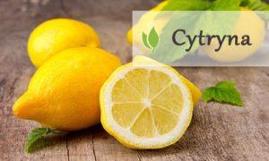 Cytryna wlasciwosci zdrowotne
