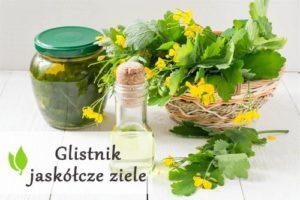Glistnik jaskółcze ziele - lecznicze działanie, zastosowanie i skutki uboczne
