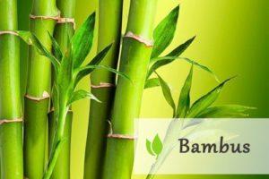 Bambus - doceniany dar natury