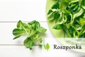 Roszponka - moc witamin i minerałów