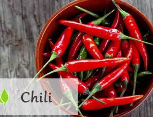 Chili – właściwości i zastosowanie