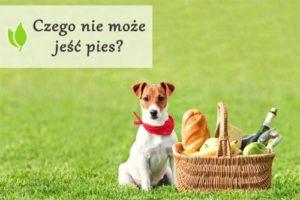 Czego nie może jeść pies?