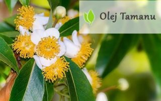 Olej Tamanu - właściwości i zastosowanie