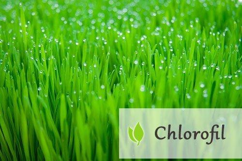 Chlorofil - właściwości i występowanie