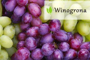 Winogrona - właściwości i zastosowanie