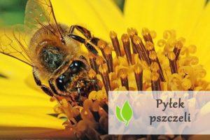 Pyłek pszczeli - cenny dla zdrowia i urody
