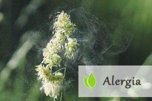 Alergia - jak sobie z nią radzić?