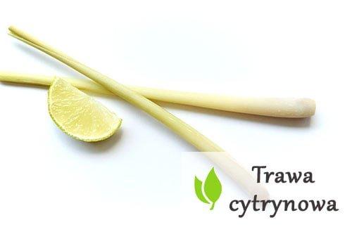 Trawa cytrynowa - właściwości zdrowotne