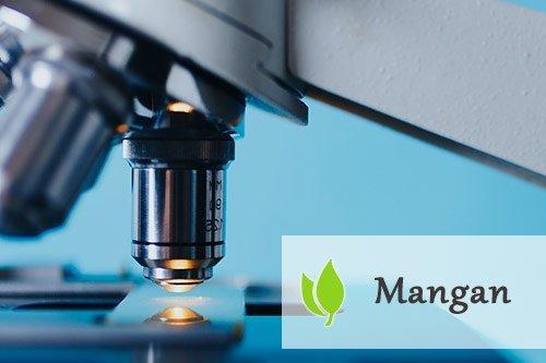Mangan - jakie funkcje spełnia w organizmie?