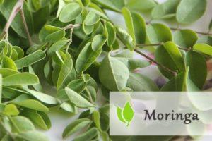 Moringa - drzewo o cudownych właściwościach