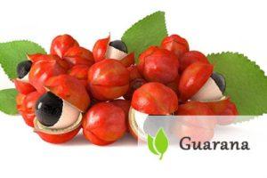 Guarana - charakterystyka