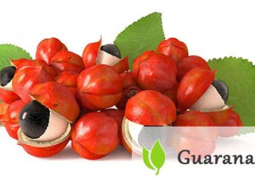 Guarana – charakterystyka