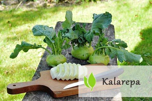 Kalarepa - jak wpływa na zdrowie człowieka?