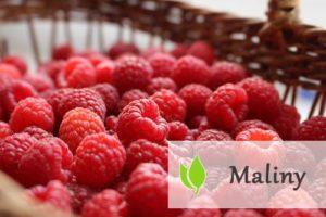 Maliny - jak wpływają na nasze zdrowie?