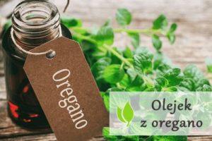 Olejek z oregano - właściwości i przeciwwskazania