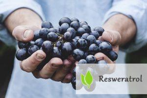 Resweratrol - działanie, właściwości, źródła