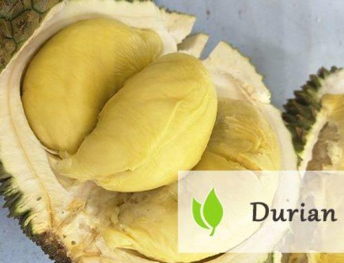 Durian – śmierdzący owoc tropikalny