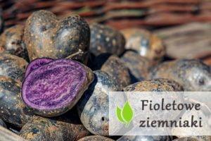 Fioletowe ziemniaki - właściwości i zastosowanie