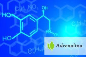 Adrenalina - jakie funkcje pełni w organizmie?