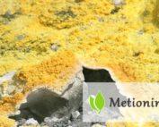 Metionina - właściwości i zastosowanie