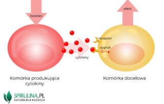 Cytokiny