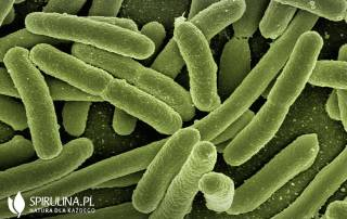 Bakterie oporne na antybiotyki