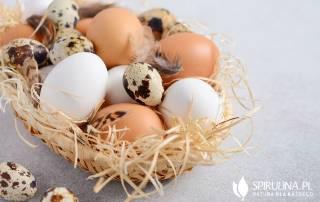 Jakie jajka są najzdrowsze