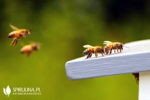 Terapia jadem pszczelim