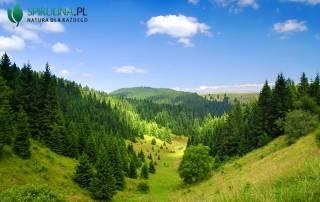 Wpływ lasu na zdrowie człowieka